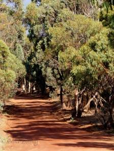 The red dirt of Australia